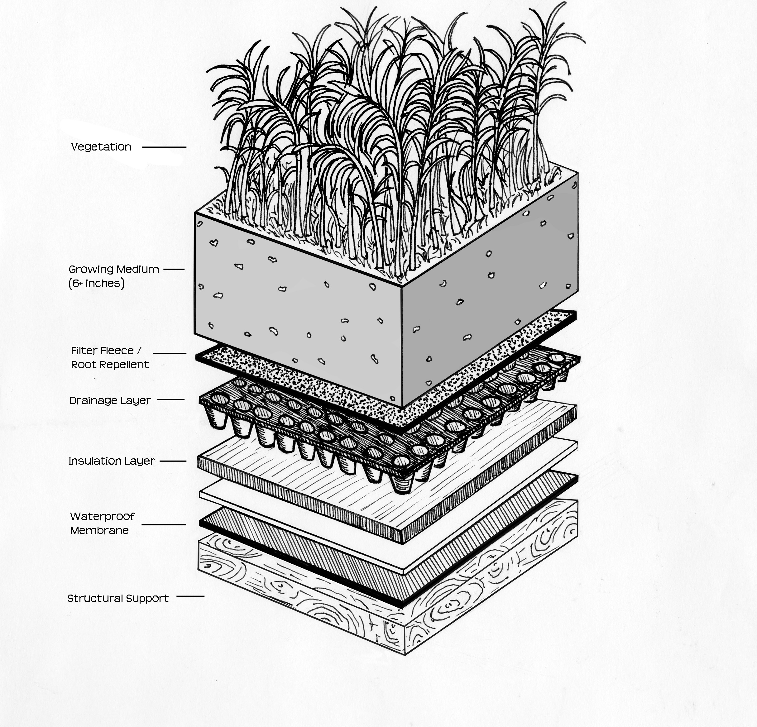 Components Of An Intensive Green Roof Click For High Res Version