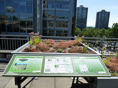 New Green Roof Standards Redefine Size And Complexity
